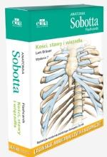 Anatomia Sobotta Flashcards. Kości, stawy i więzadła. Łacińskie mianownictwo anatomiczne