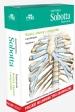 Anatomia Sobotta Flashcards. Kości, stawy i więzadła. Polskie mianownictwo anatomiczne